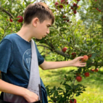 Boy picking apple at TCFD